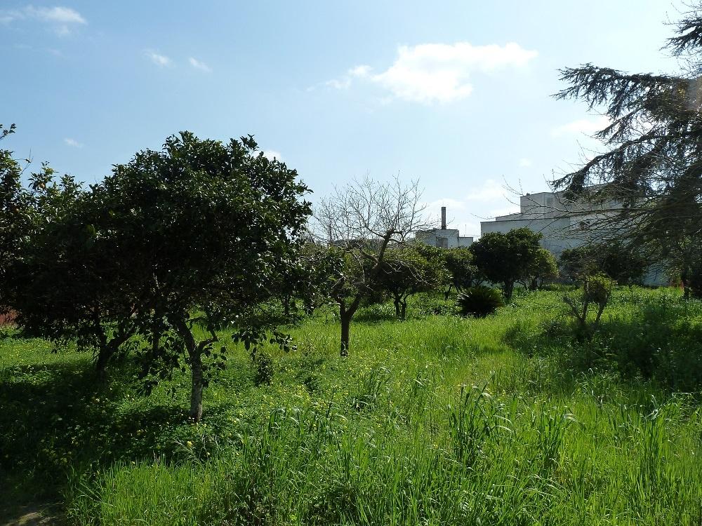 Lotti di terreno edificabile in vendita a bagnolo del - Bagnolo del salento ...